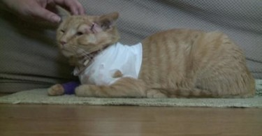 Hero Cat Saves Baby`s Life By Taking A Stray Bullet