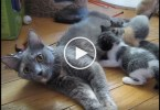 Mom Cat Calls Her Hungry Kitties For A Lunch Time. Precious Moments !