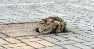 Abandoned Poor Cat Sat On the Same Place For Over A Year Waiting For His Humans To Return