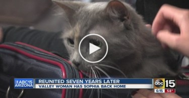 Cat Missing for 7 Years Reunited With Her Humans. Breathtaking Story