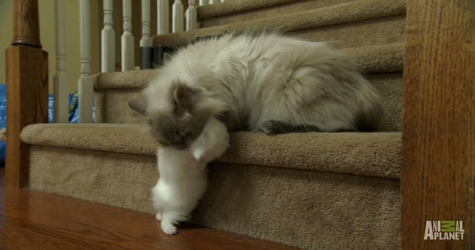 Cat Mom Comes To Rescue Her Tiny White Baby