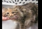 Kitten With Paws Frozen To The Ground Is Rescued