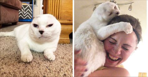 Woman Adopts Deaf Senior Cat Without Ears, Everybody Ignored, And After That He Rescues Her
