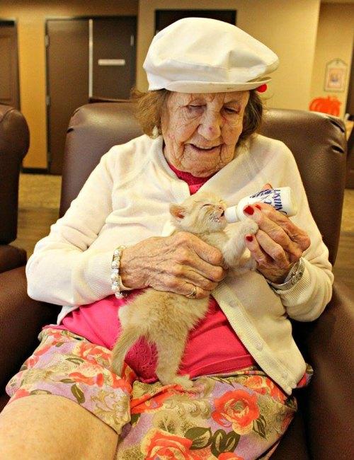 Residents  Of Elderly Care Center Caring For Orphaned Kitties