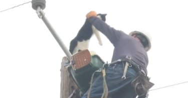 This Unlucky Cat Was Stuck 9 Days On An Electric Pole, Before Being Rescued