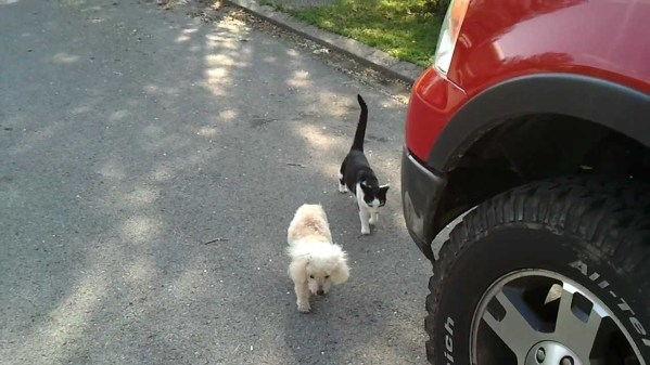 This Dog Is Blind, But His Friend Cat Is Helping Him To Walk. Heartwarming VIDEO !