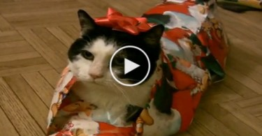 The Perfect Way To Wrap Your Kitty For Christmas. Adorable Video.
