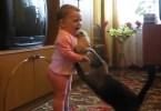 kid grabs kitten , mom cat reacts
