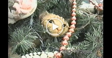 Cat Strongly Refused To Leave The Christmas Tree. Hilarious!