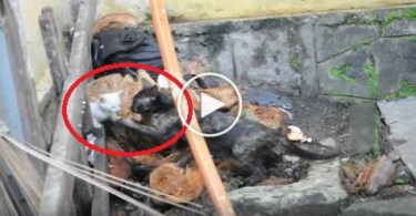 Cat Mom Trying To Save Her Little Kitten. Incredible Video
