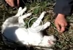 Kind Firefighters Rescued Injured Cat. Heartwarming Video !