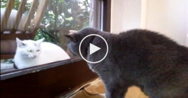 The Neighbor`s Cat Knocked on The Glass Door, But When House Cat Noticed Her ....