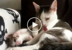 Mom Cat Was Cleaning Herself, When Kitten Decided To Copy Her. Cuteness Overloaded.