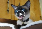 "Just Watch How This Cat Reacts, When Her Human Asked Her ""Are You Hungry"". LOL"
