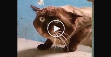 Strange Looking Cat Had The Most Unusual Conversation With Man. Just Amazing !