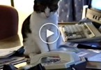 This Cat Answers Phone Call. Unbelievable Video !