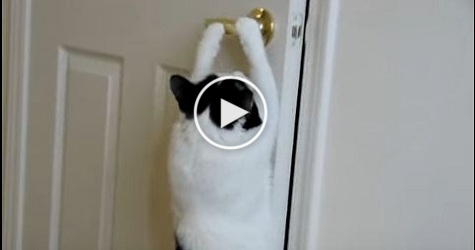 Cat Opens Door By Itself ! Smartest Cat EVER !
