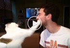 Kitty Refuses Kisses And Slaps Her Owner. Hilarious Video !