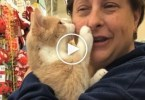 Rescued Cat Can`t Stop Cuddling Her Human After Being Adopted