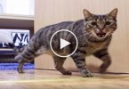 Cat Really Misses His Owner. Kitty`s Reaction Caught On Hidden Camera.