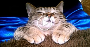 Cat Peacefully Sleeping In a Bed Like A Real Human. Amazing Video !
