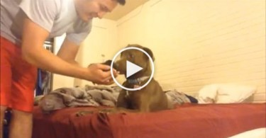 This Guy Introduced Rescued Abandoned Newborn Kitten To His Dog.