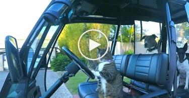 Cat Loves Dancing To Justin Timberlake