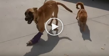 Injured Dog Refused To Walk Again Until He Made a New Fur Friend !