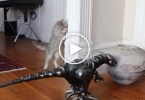 Cat Meets Robot Dinosaur For The First Time