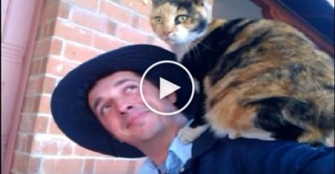 This Cat Loves To Climb On Her Favorite Mailman