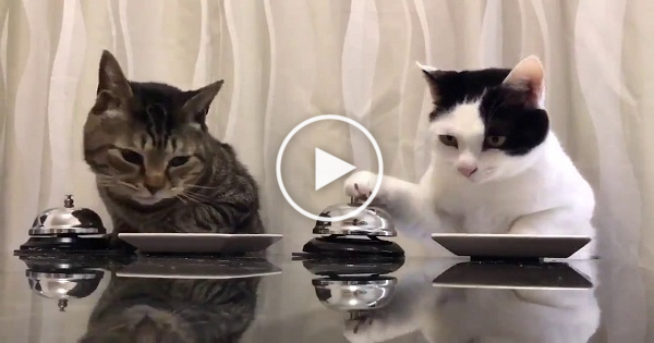 Cat Ringing Bell To Eat