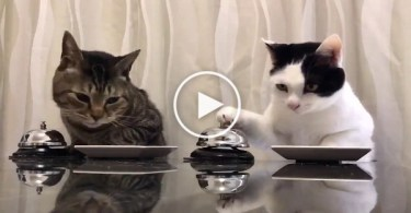 2 Cats Can`t Stop Ringing The Bell For More Treats. Hilarious !
