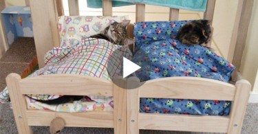 IKEA Donated Mini Beds For This Cats. Now, They Are Excited To Sleep In Their Own Beds