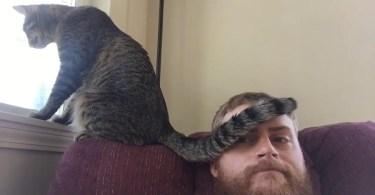 passive aggressive cats