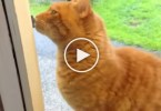 Smart Cat Rings The Doorbell. How Is This Even Possible ?