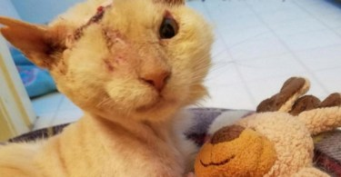 acid attack cat