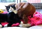 Paralyzed Cat Has a Special Bond With Abandoned Puppy