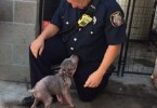 Rescued Puppy Went Crazy When He Saw The Firefighter Who Rescued His Life