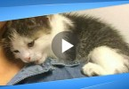 This Starving Kitten Found In The Junk Yard, But Watch When He Realized He Is Rescued.. He Climbed on Her Shoulder ..
