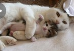 Mommy Can`t Stop Cuddling Her Cute Kittens. Heartwarming Moments ...