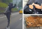 Motorist Stops Busy Traffic To Save This Little Kitten. This Man is a HERO !