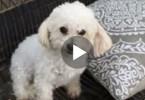 heartbroken mom dog
