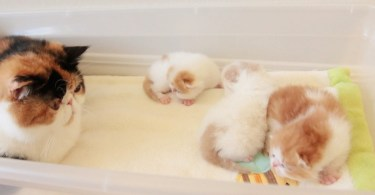 Cat Mommy Has The Cutest Conversation With Her Fluffy Kittens