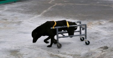 Kind Man Makes Special Wheelchairs For Dogs!