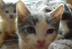 This Is The Most Unique Litter Of Calico Kittens