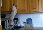 This Siamese Kitty Was Caught Stealing From Kitchen