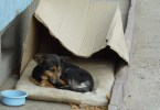 Touching Transformation Of A Rescued Homeless Dog Living In a Cardboard Box