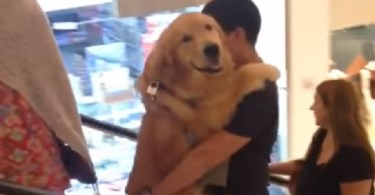 Man Carrying Up His Golden Retriever On The Escalator