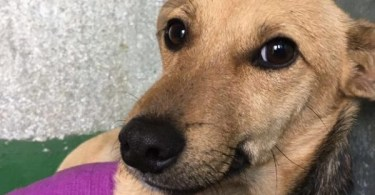 Family Dog Hit By Car Was Dumped By His Owners For Being Too Gross...