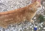 Friendliest Stray Kitty Dances When They Pet Him!